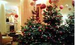 Wij leveren kerstbomen met versiering voor feest