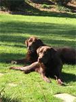Huisdieren mee naar Ardennen, 2 pers Petit Gite