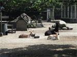 Camping Trimunt heeft nog enkele chalets,huurwoning tijdelik