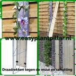 Klimplanten tegen de schutting tuinscherm muur