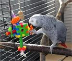 Grijs papegaai
