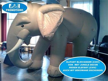 Grote foto reuze olifant huren gelderland kameel huren etc. diensten en vakmensen algemeen
