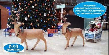 Grote foto prachtige arrenslede huren rendieren 0599416200 diversen kerst