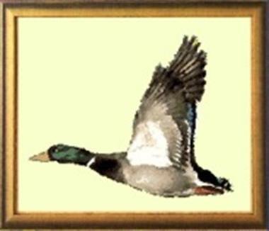 Grote foto borduurpakket eend dieren en toebehoren overige dieren