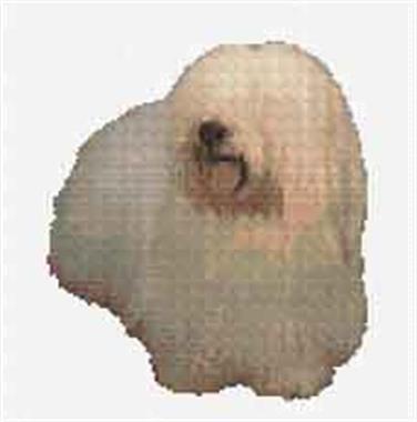 Grote foto borduurpakket coton du tulear dieren en toebehoren overige dieren