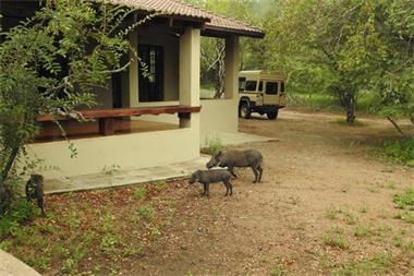 Grote foto te huur ubuntu bush house kruger zuid afrika vakantie afrika