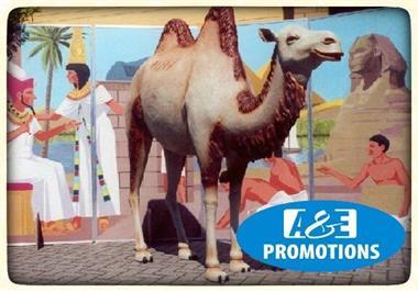 Grote foto xl kameel verhuur amsterdam utrecht 0599 416200 diensten en vakmensen entertainment