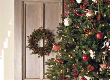 Grote foto wij leveren huur kerstbomen bij u in z. nederland diensten en vakmensen feesten