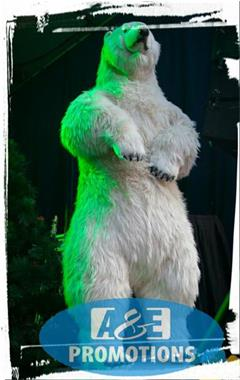 Grote foto verhuur poolbeesten ijsbeer figuren gent knokke diensten en vakmensen themafeestjes