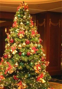 Grote foto nu in promo huur kerstbomen bij u geleverd diversen kerst