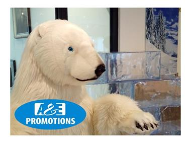 Grote foto verhuur ijs rekwisieten ijs decoratie amsterdam diensten en vakmensen algemeen