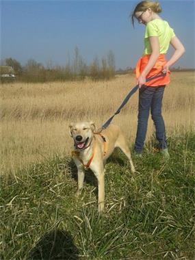 Grote foto alma ter adoptie beter hondenleven dieren en toebehoren overige honden