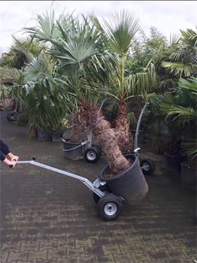 Grote foto transportkar pmm voor de grotere potten doe het zelf en verbouw kruiwagens en transportwagens