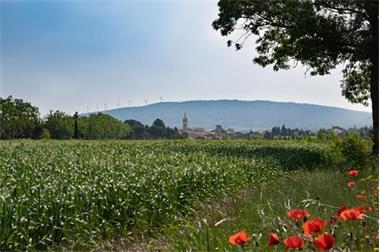 Grote foto uw vakantiewoning ten midden van de wijngaarden vakantie frankrijk