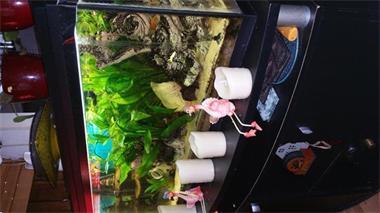 Grote foto aangeboden aquarium 100 x 40 x 40 dieren en toebehoren aquariumvissen