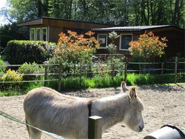 Grote foto tijdelijk werk nabij groningen drachten huur direct een chal vakantie nederland noord