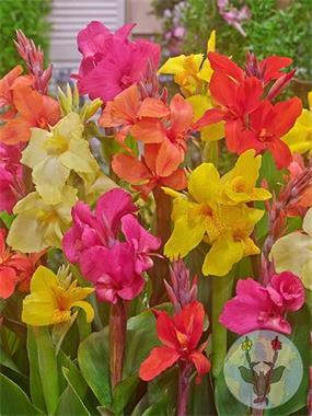 Grote foto groot assortiment canna tuin en terras bloembollen en zaden