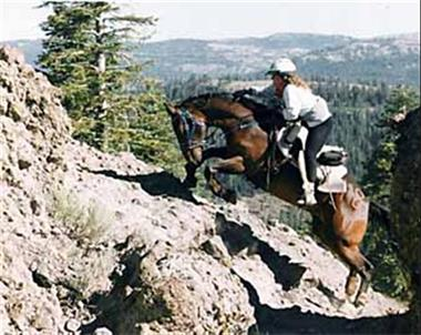 Grote foto hou uw paard in beweging dieren en toebehoren paarden