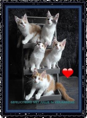 Goede Nog 1 Maine Coon Kitten Beschikbaar Kopen | Overige Katten CT-92