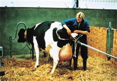 Grote foto veeverlosser diverse uitvoeringen dieren en toebehoren overige