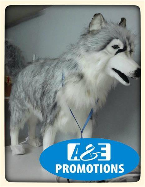 Grote foto noorderlicht props huskies amsterdam 0599416200 diversen kerst