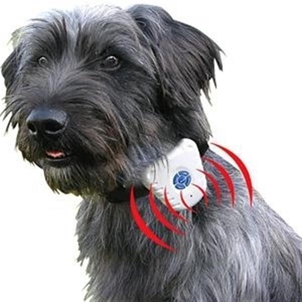 Grote foto anti blaf band antiblafband blafband trainings traingingsban dieren en toebehoren toebehoren