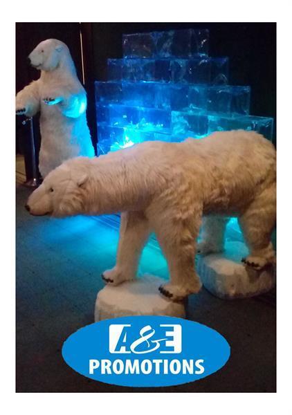 Grote foto fotoshoot aurora borealis ijsmuur verhuur haarlem diensten en vakmensen entertainment