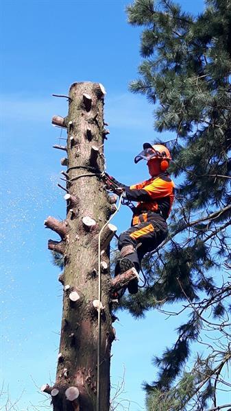 Grote foto bomenkappen boomkappen boom kappen rooien diensten en vakmensen tuinmannen en stratenmakers