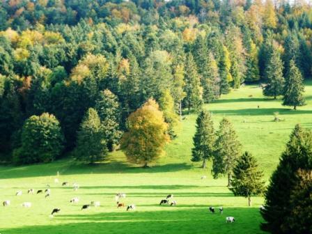 Grote foto top locatie 3 5 chalet in zwitserland jura vakantie zwitserland