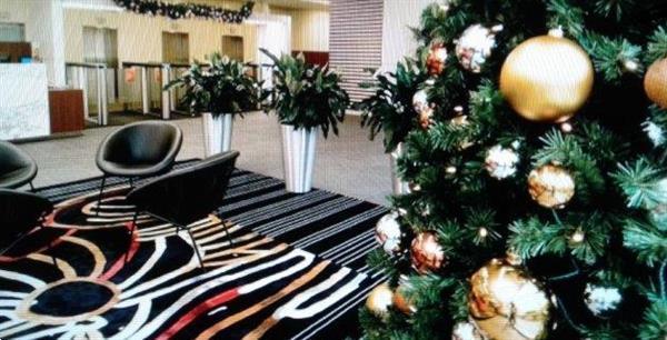 Grote foto versierde kerstbomen bij u geleverd diensten en vakmensen biertapjes