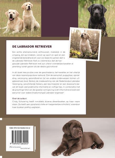 Grote foto de labrador retriever nieuw dieren en toebehoren retrievers spani ls en waterhonden