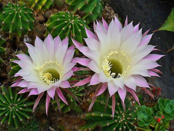 Grote foto eboek kamerplanten encyclopedie boeken natuur
