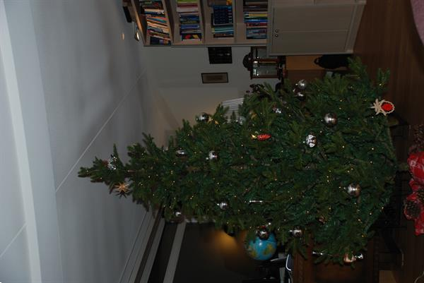 Grote foto kerstboom te koop diversen kerst