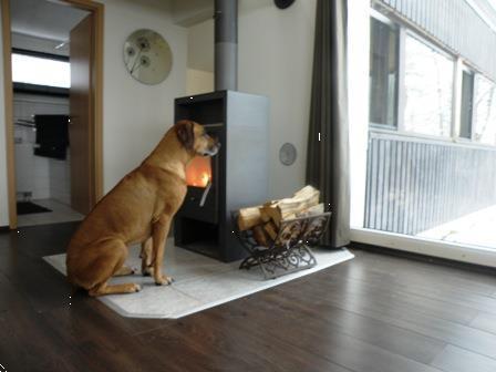 Grote foto luxe huis sauerland sauna hond welkom vakantie duitsland west