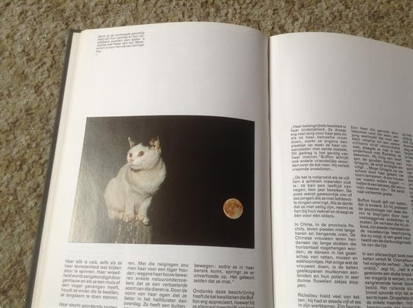 Grote foto een boek van katten lieve schattige huisdieren boeken dieren en huisdieren