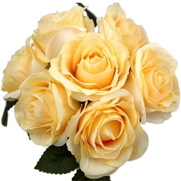Grote foto zijde rozen large open rose bush champagne grote bloem verzamelen overige verzamelingen