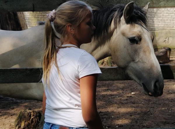 Grote foto verzorg lease of bijrijpony gezocht dieren en toebehoren verzorgpaard