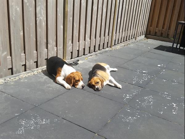 Grote foto kleinschalige uitlaatservice oppas rotterdam e.o diensten en vakmensen honden verzorging oppas en les