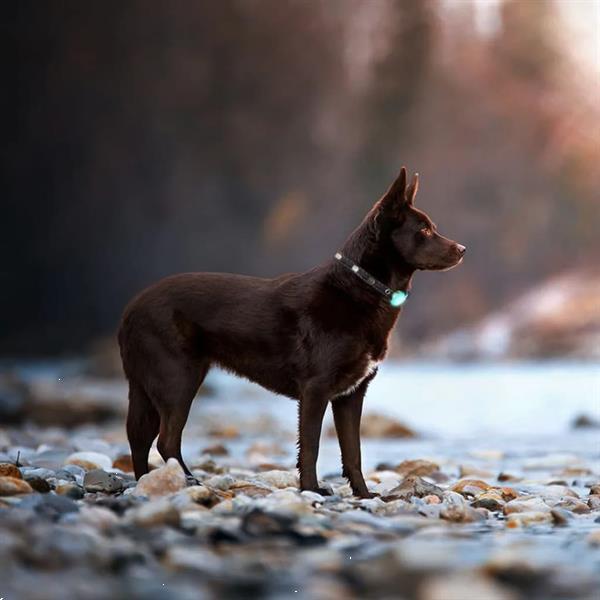 Grote foto petalways stappenteller huisdieren fit light dieren en toebehoren overige