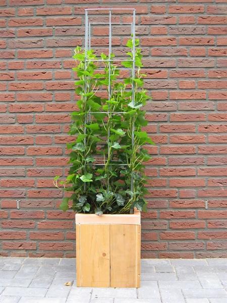Grote foto plantensteunen voor rozen clematis klimop jasmijn tuin en terras bloemen en planten