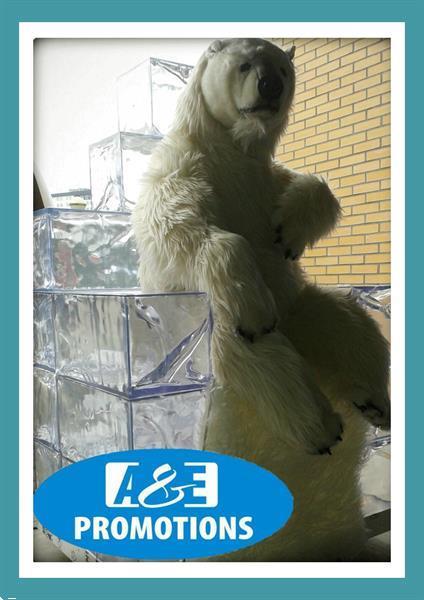 Grote foto ijs gletsjer muur verhuur ijsbeer bewegend hasselt diversen kerst