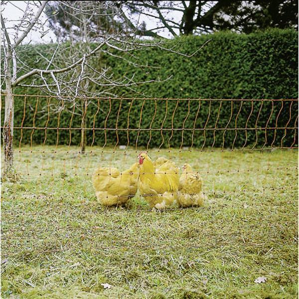 Grote foto oranje kippennet 112cm 50m. dubbele pen dieren en toebehoren vee en pluimvee accessoires