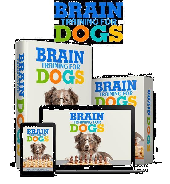 Grote foto who needs this secret to using your dog natural dieren en toebehoren toebehoren