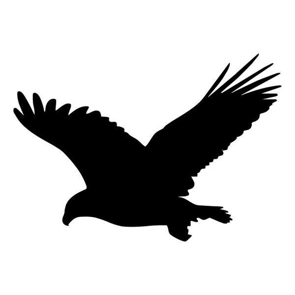 Grote foto vogels 01 verzamelen overige verzamelingen