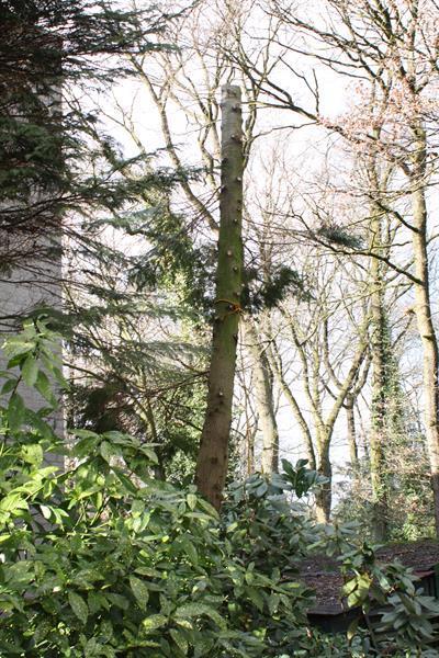 Grote foto tuinman hovenier nodig diensten en vakmensen tuinmannen en stratenmakers