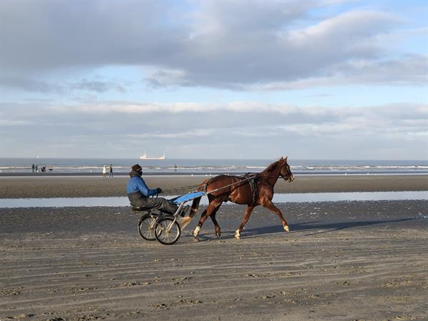 Grote foto belgische kust nieuwpoort aan zee vakantie belgi
