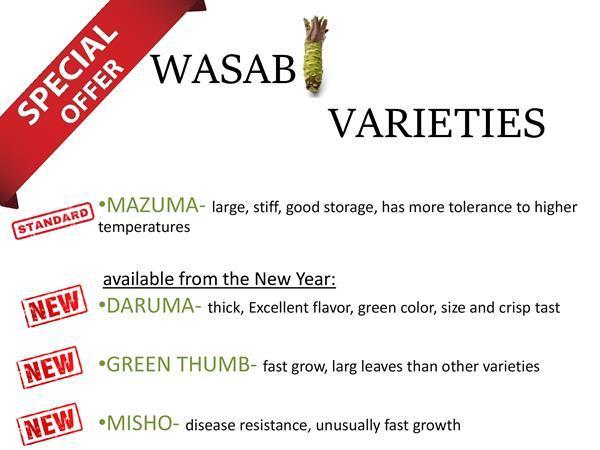 Grote foto 10 x wasabi plants seed pflanze plant sushi planta agrarisch glastuinbouw