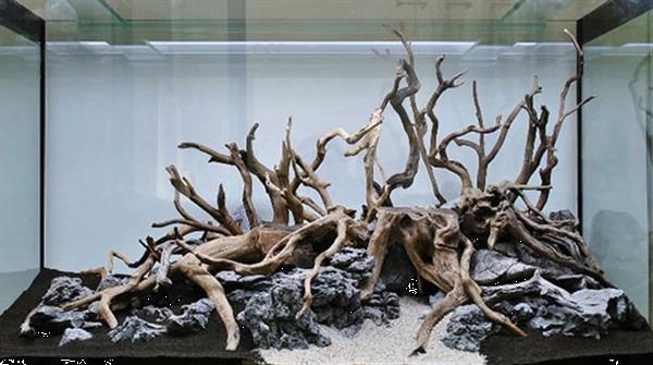 Grote foto spider wood 70 90cm dieren en toebehoren vissenkommen