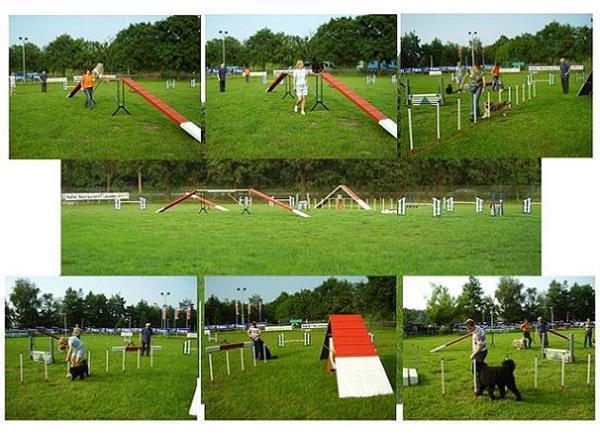Grote foto puppy cursus in amersfoort dieren en toebehoren puppycursus
