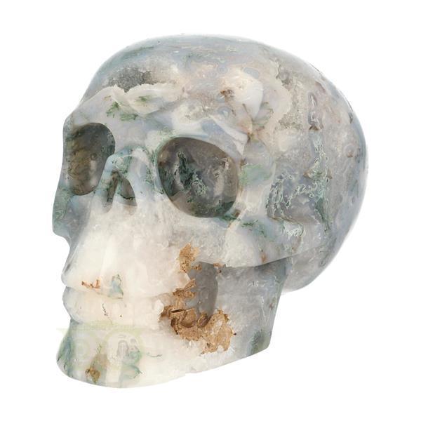 Grote foto mosagaat schedel 1.4 kg verzamelen overige verzamelingen